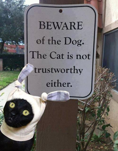 BEWARE of the Dog.