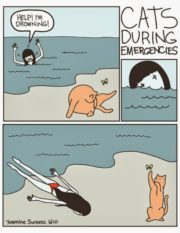 Cats during emergencies