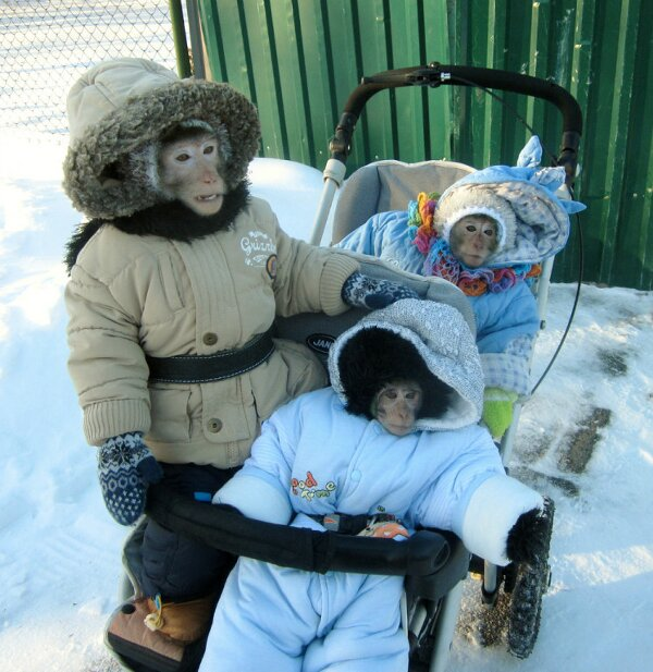 monkey's family winter outing