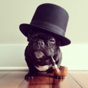 Most Dapper French Bulldog