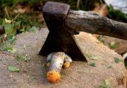 chopped mushroom penis