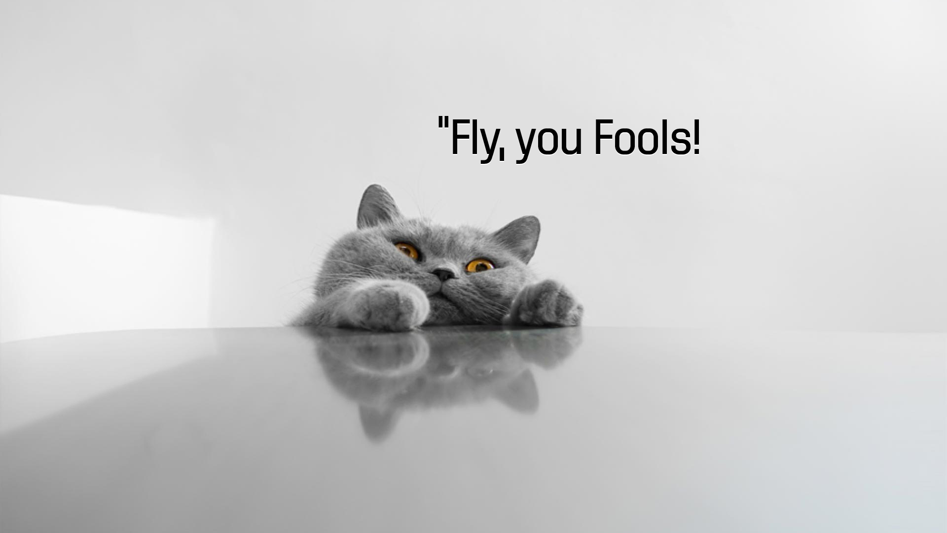 Fly, you fools!