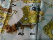 Spongepoop
