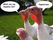 Turkey thankful for vegetarians