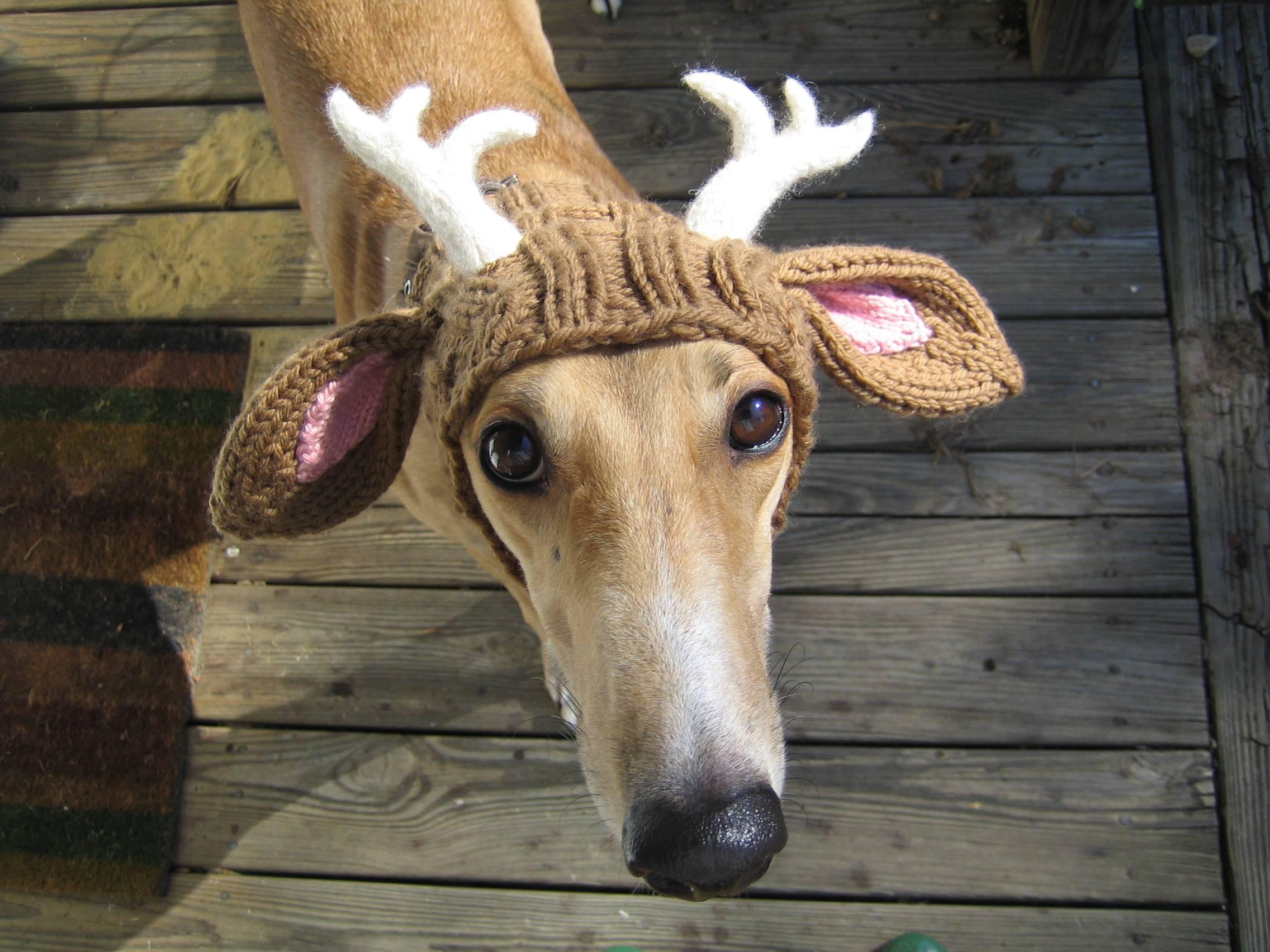 Deerdog