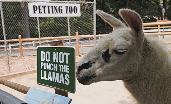 Do not punch the llamas