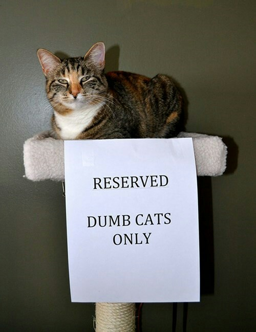 Reserved. Dumb cats only.