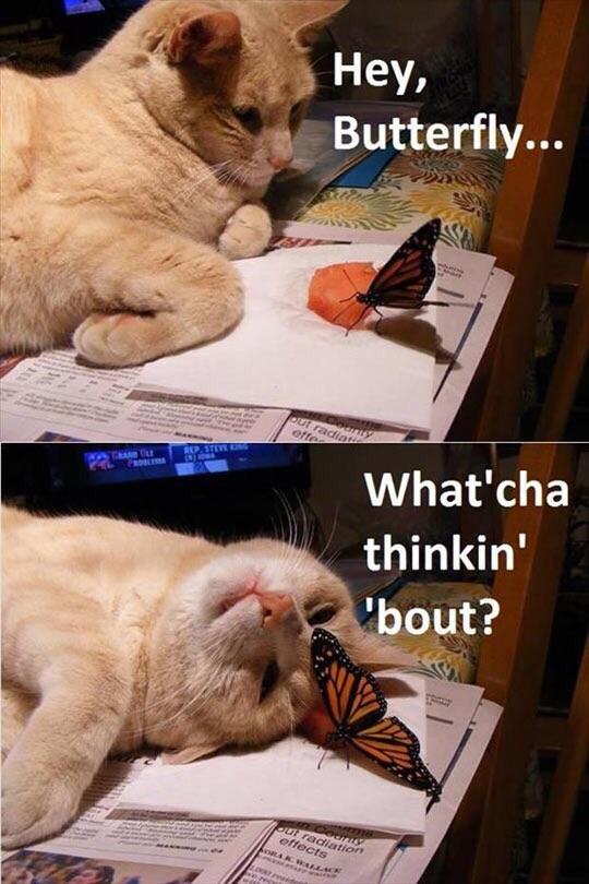 Hey butterfly…