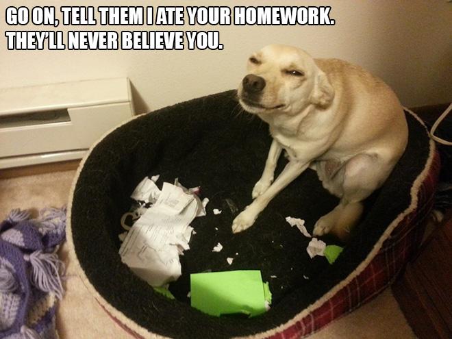 I ate you homework