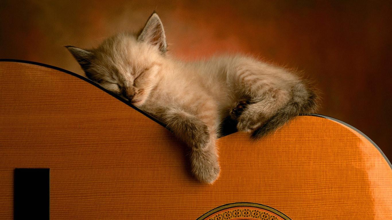 Kitten sleeping on a guitar