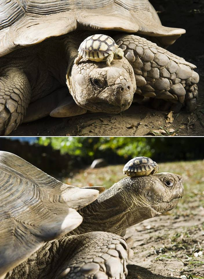 150 year old mother and her 5 day old son.