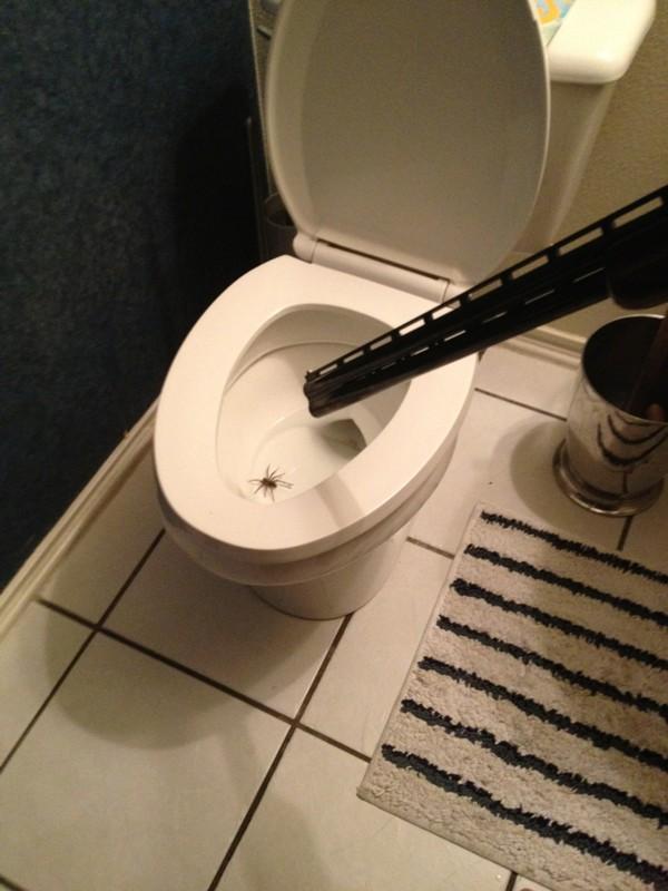 Toilet spider solution