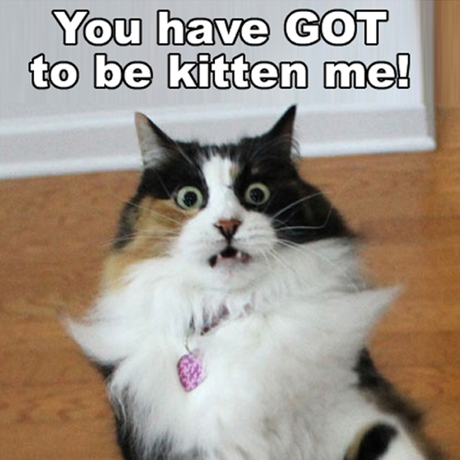 You have got to be kitten me!