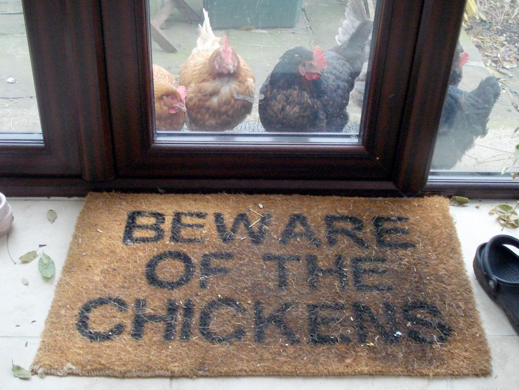 Beware of the chickens