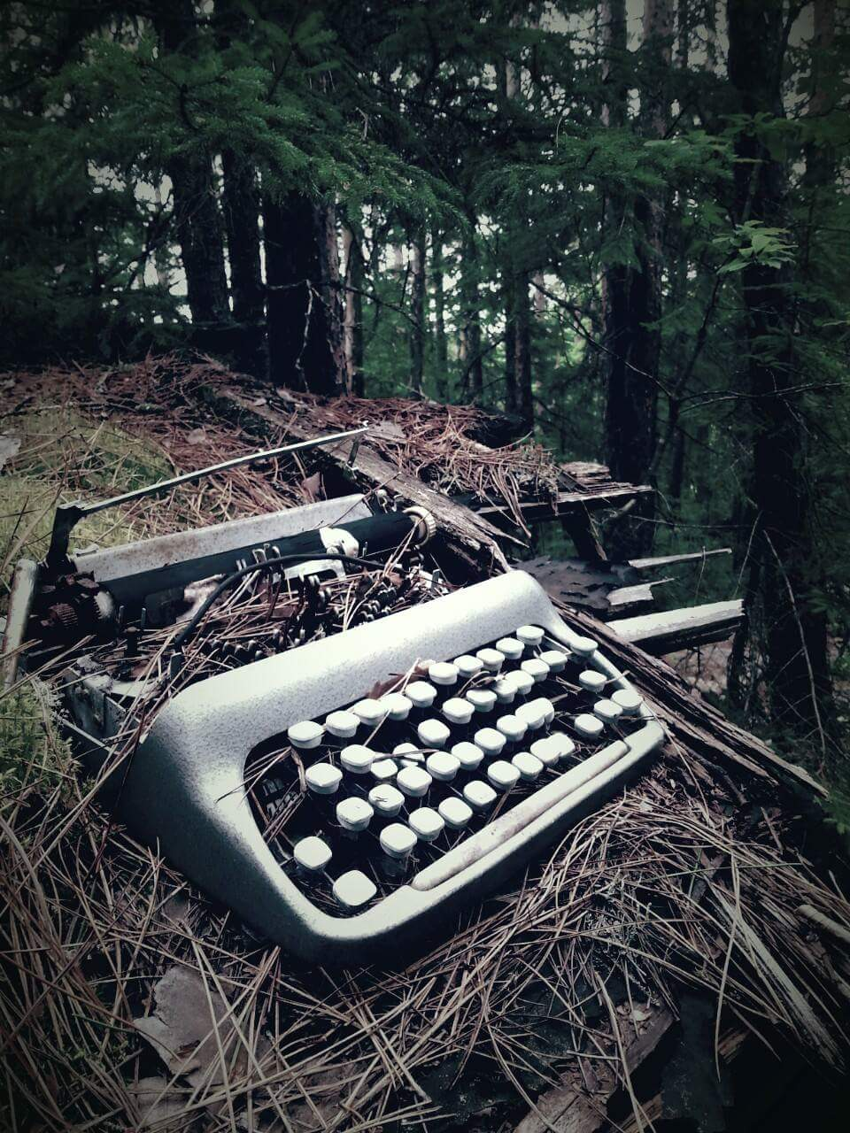 Found an old laptop in the woods