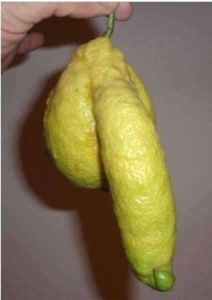 Lemon dick