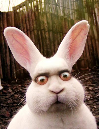 Staring rabbit eyes