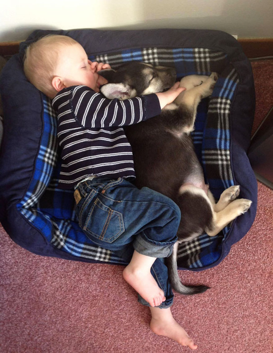 Taking a snooze with the puppy in the dog bed