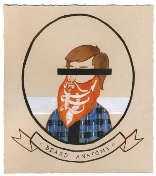 Beard anatomy