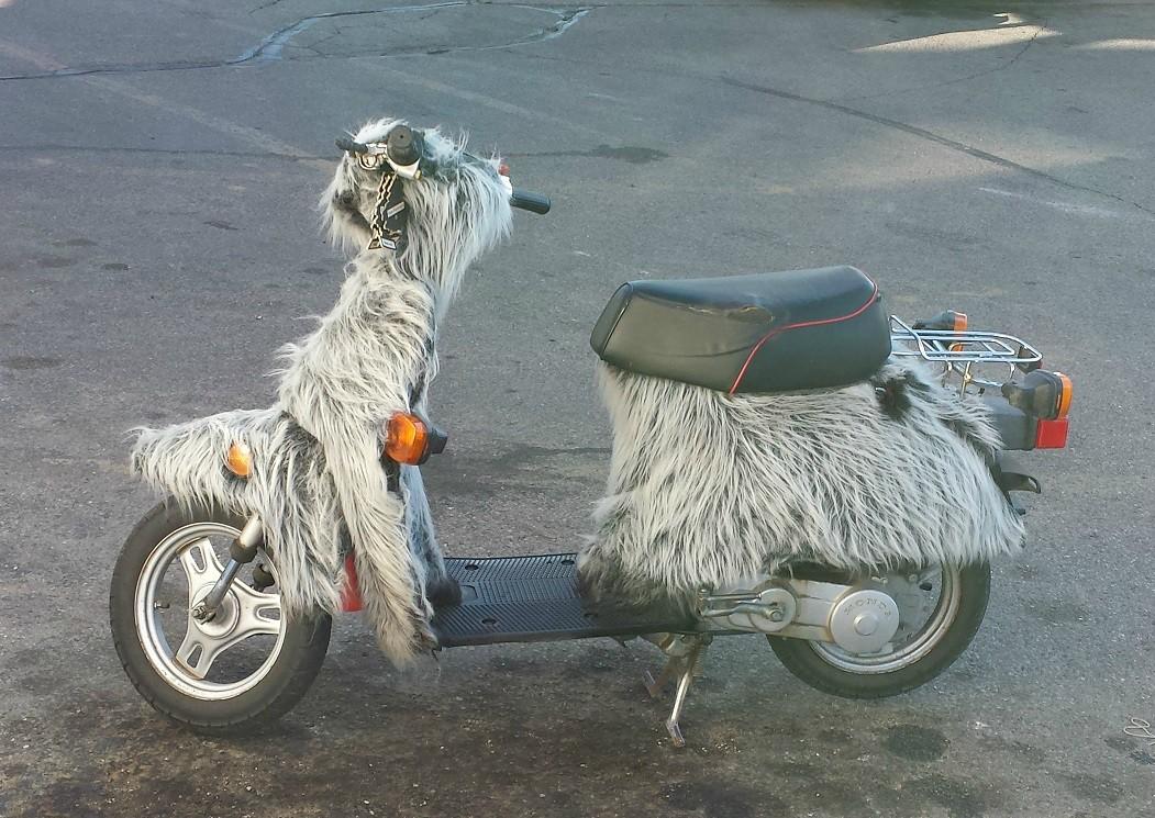 Furry motorbike