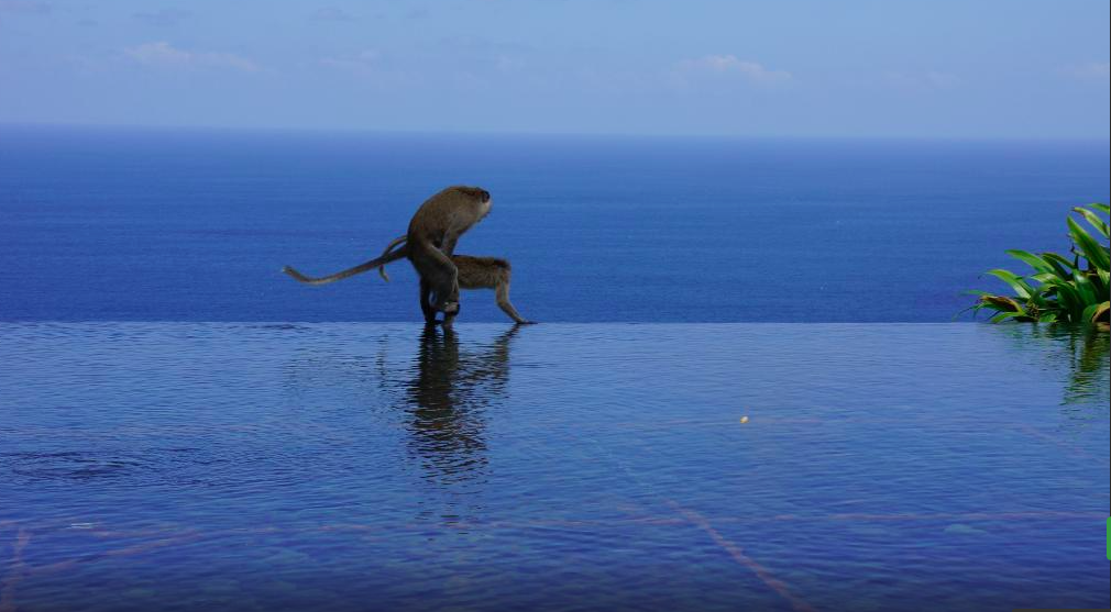 Mating on the edge of infinity pool