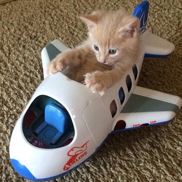 Mittens the Pilot