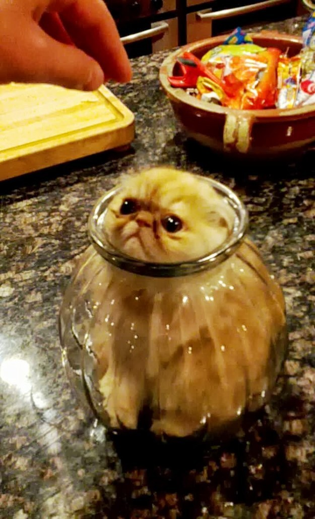 Kitten in a jar