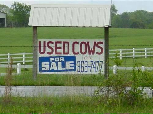 Used cows for sale