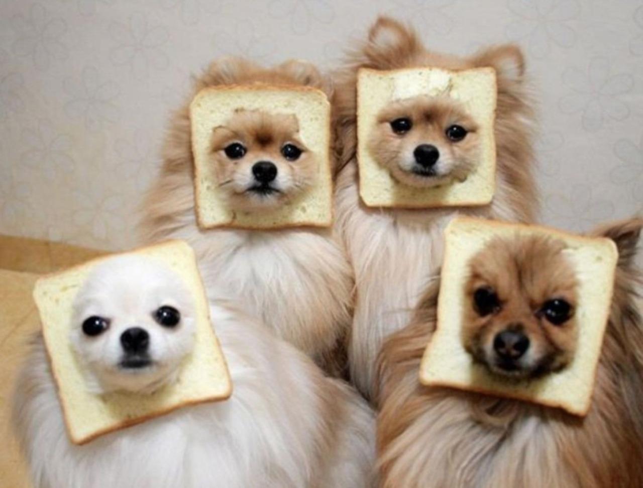 Bread dog family