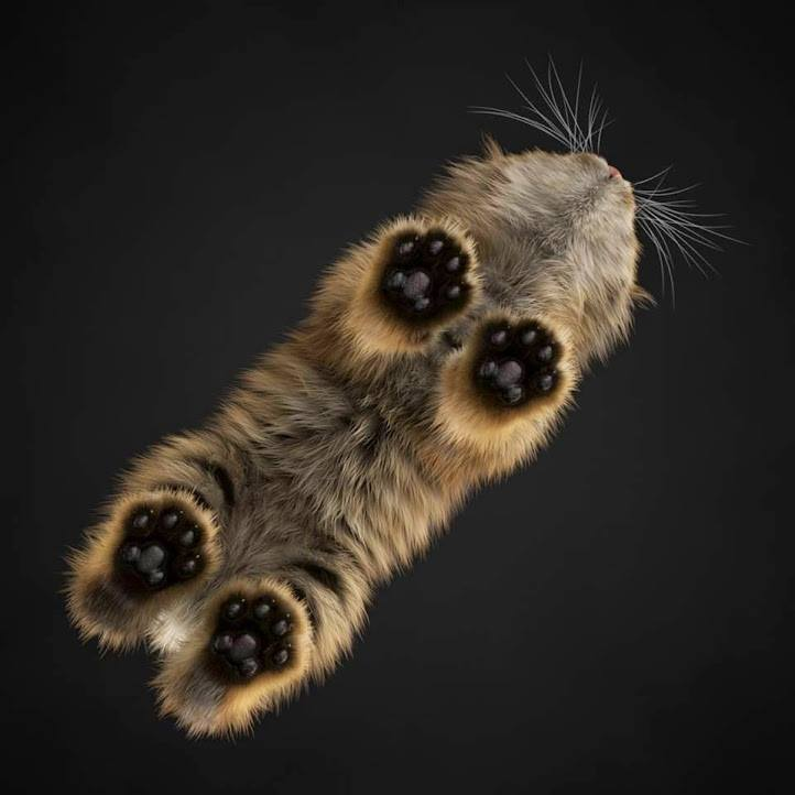 Cutest kitten paws