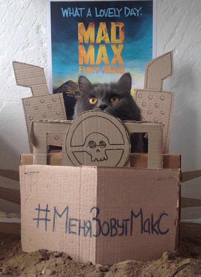 Max the cat as Mad Max