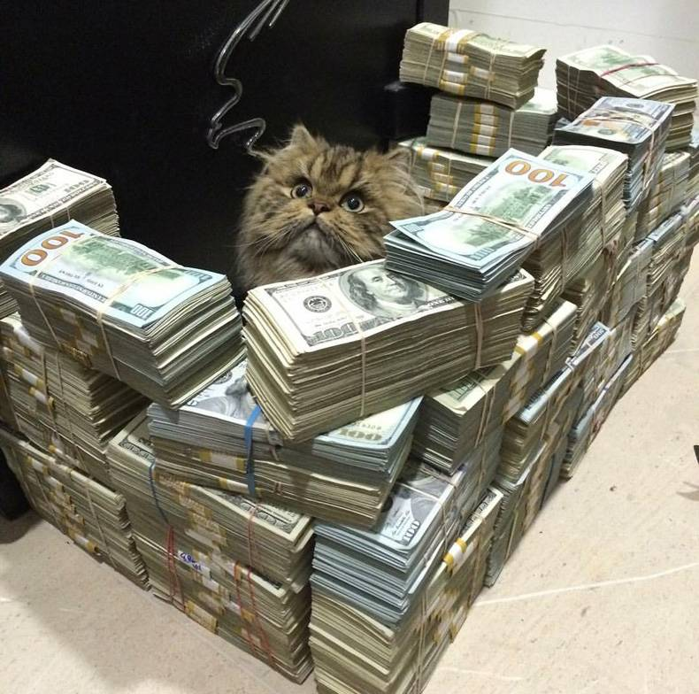 Money fort for a cat