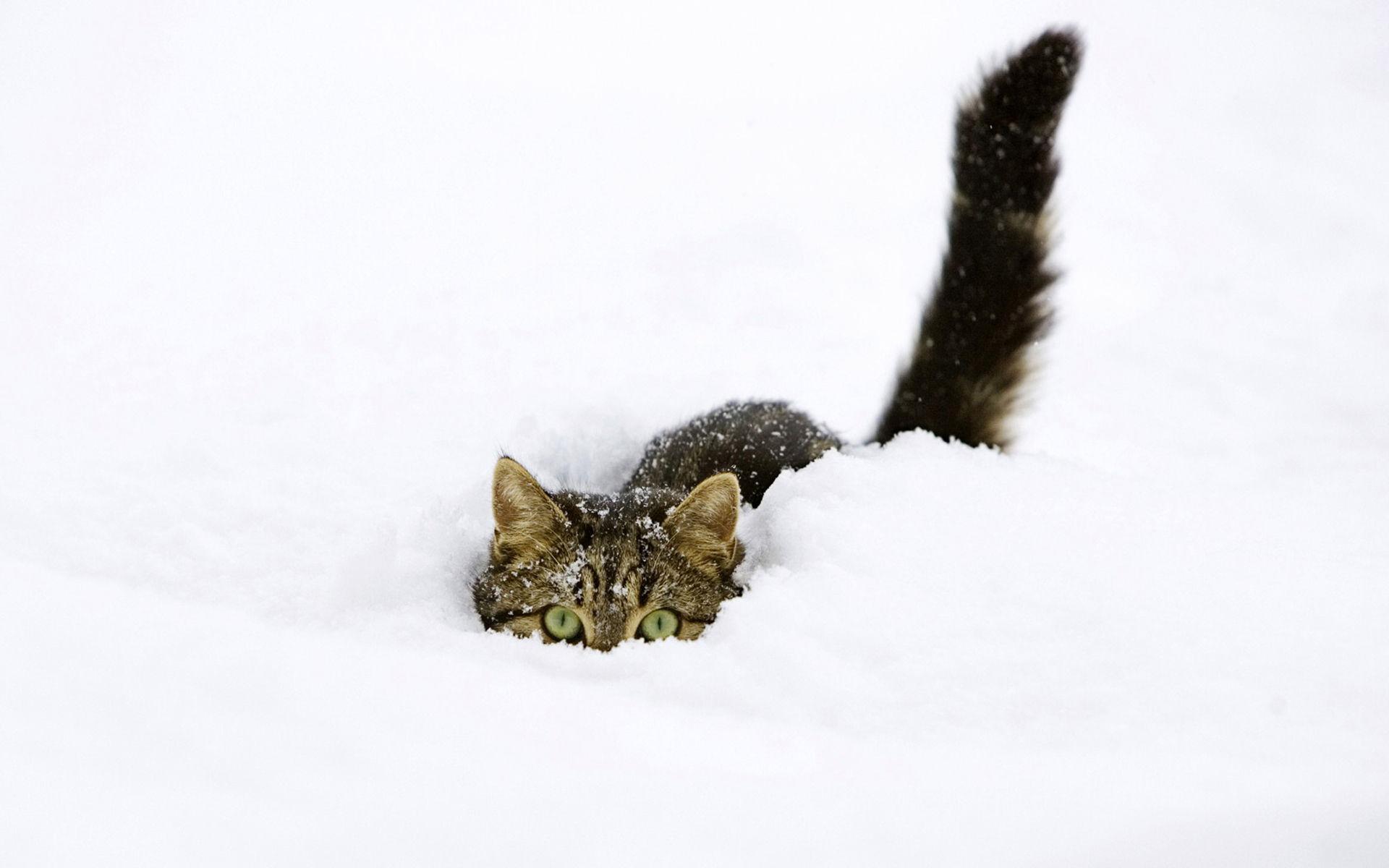 Snow pussy
