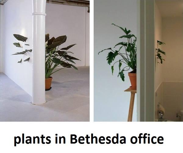 Plants in Bethesda office