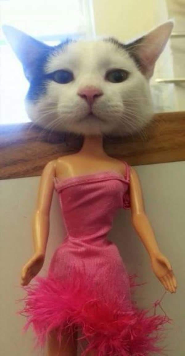 Barbie cat