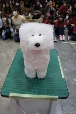 Cube dog haircut trend in Japan #1