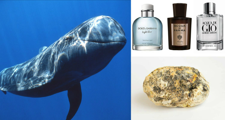 A chunk six pound whale vomit has sold for more than $150,000. It has huge demand and is used in the manufacturing of high-end perfumes.