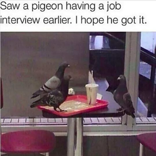 Hope the pigeon gets the job…