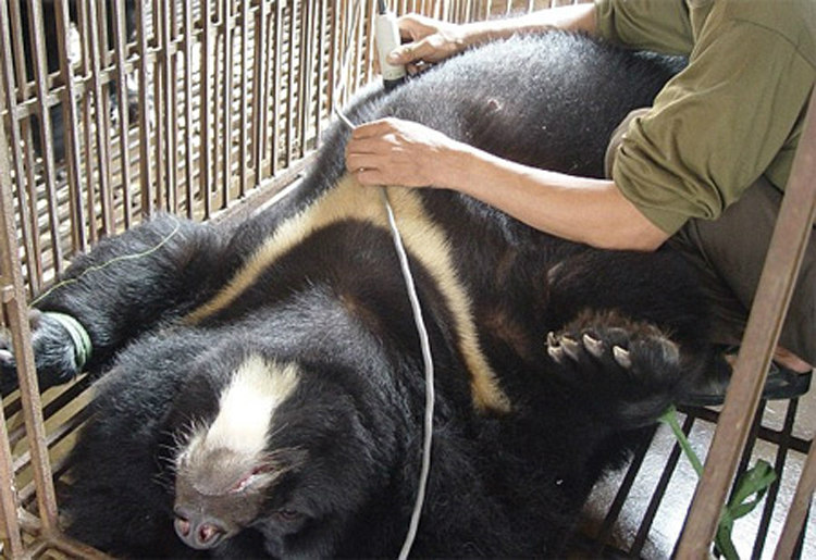 Many animals, both domestic and otherwise, have been known to commit suicide and exhibit self-destructive behavior.