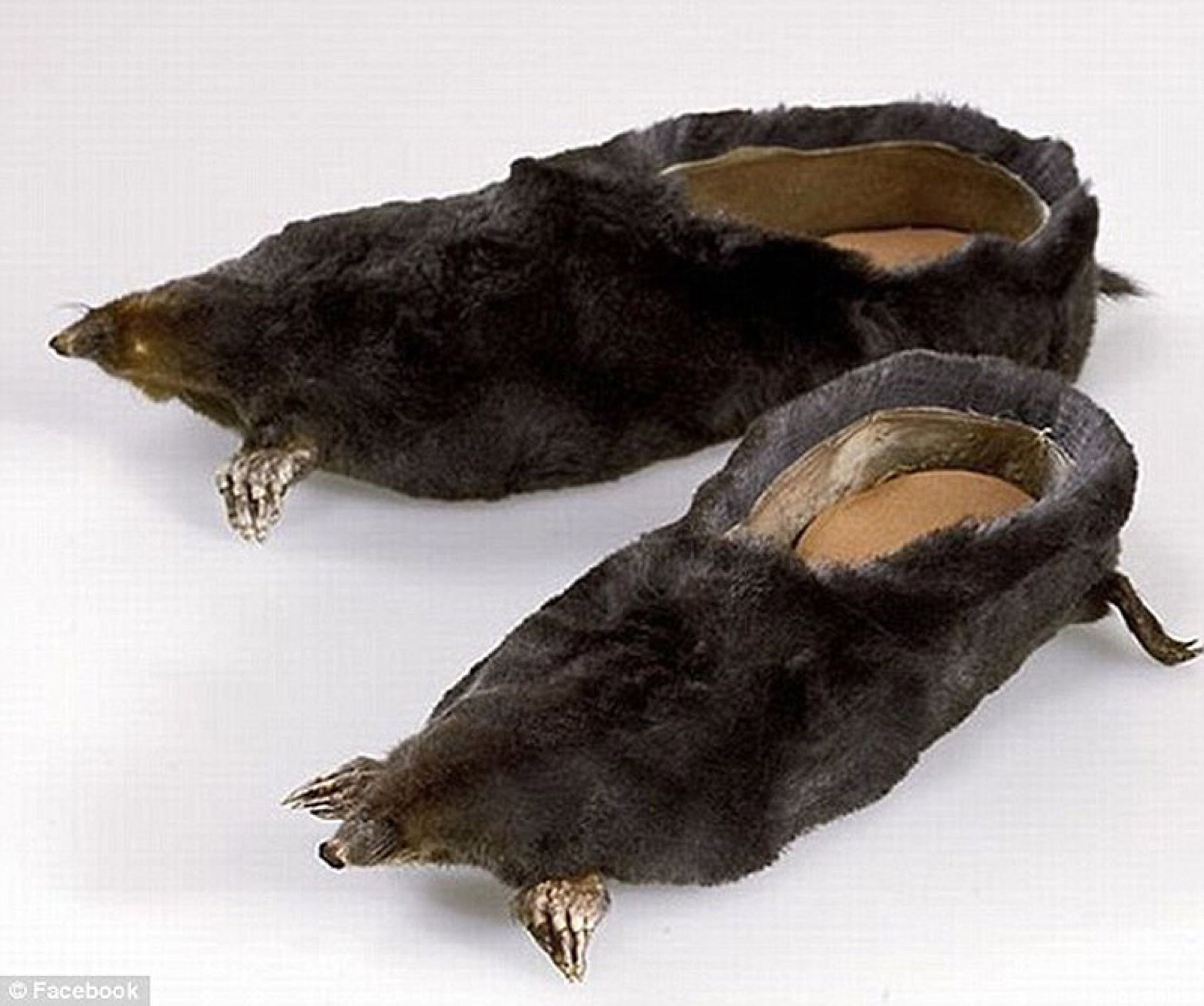 Mole taxidermy shoes