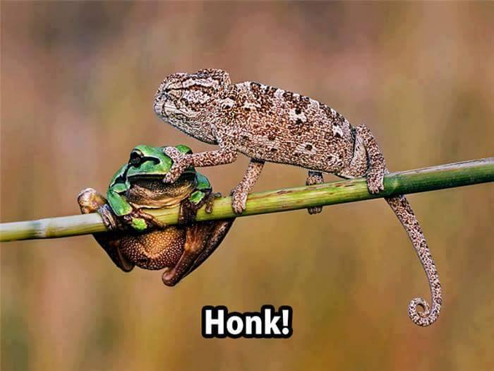 Shut up frog!