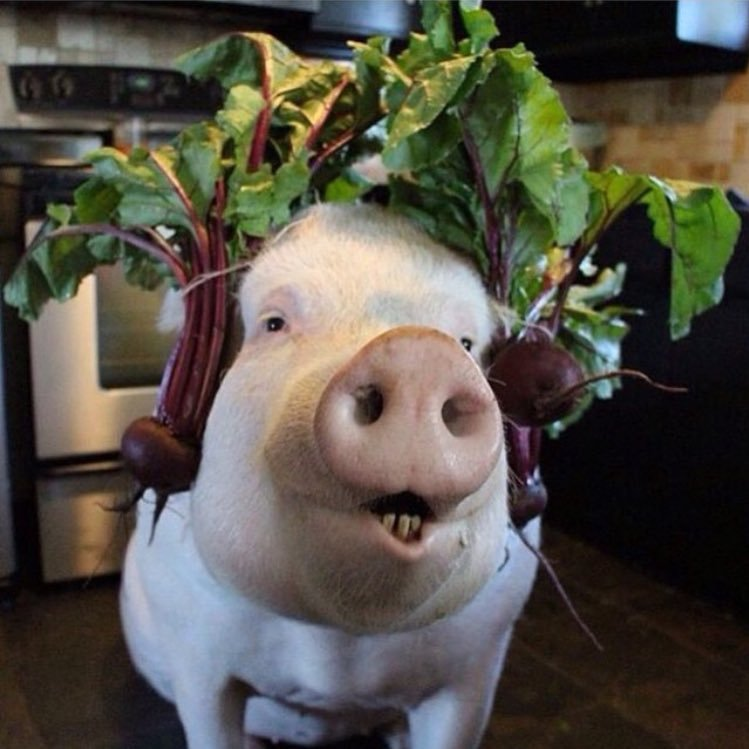 I've heard good things about these 'Beets headphones'.