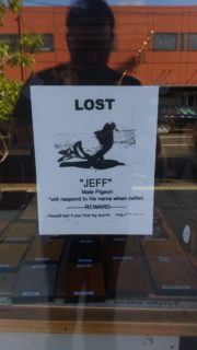 """Been screaming """"Are you Jeff"""" at Pigeons all day…"""