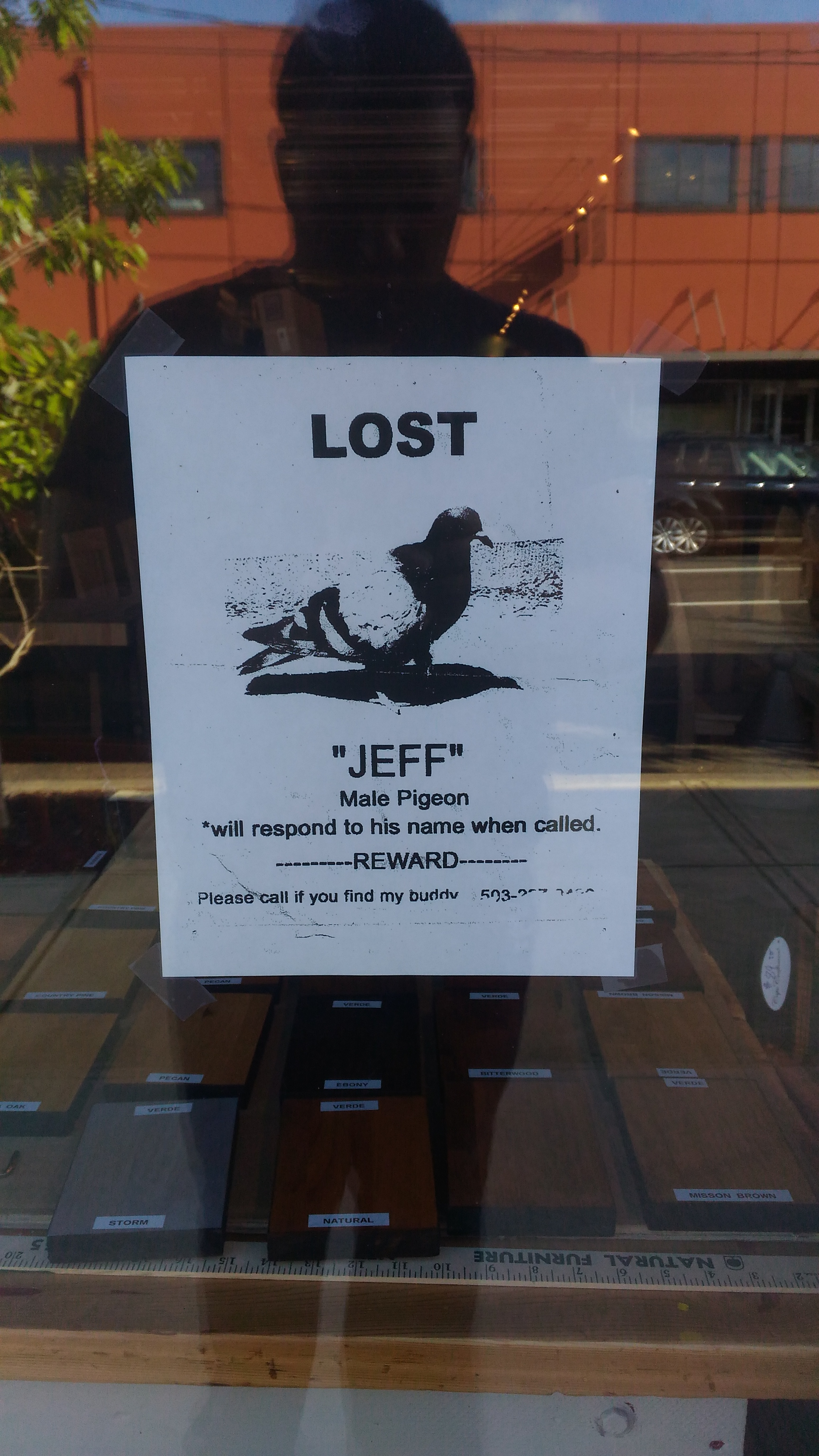 "Been screaming ""Are you Jeff"" at Pigeons all day…"