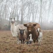 Meet the gang, they run this hood