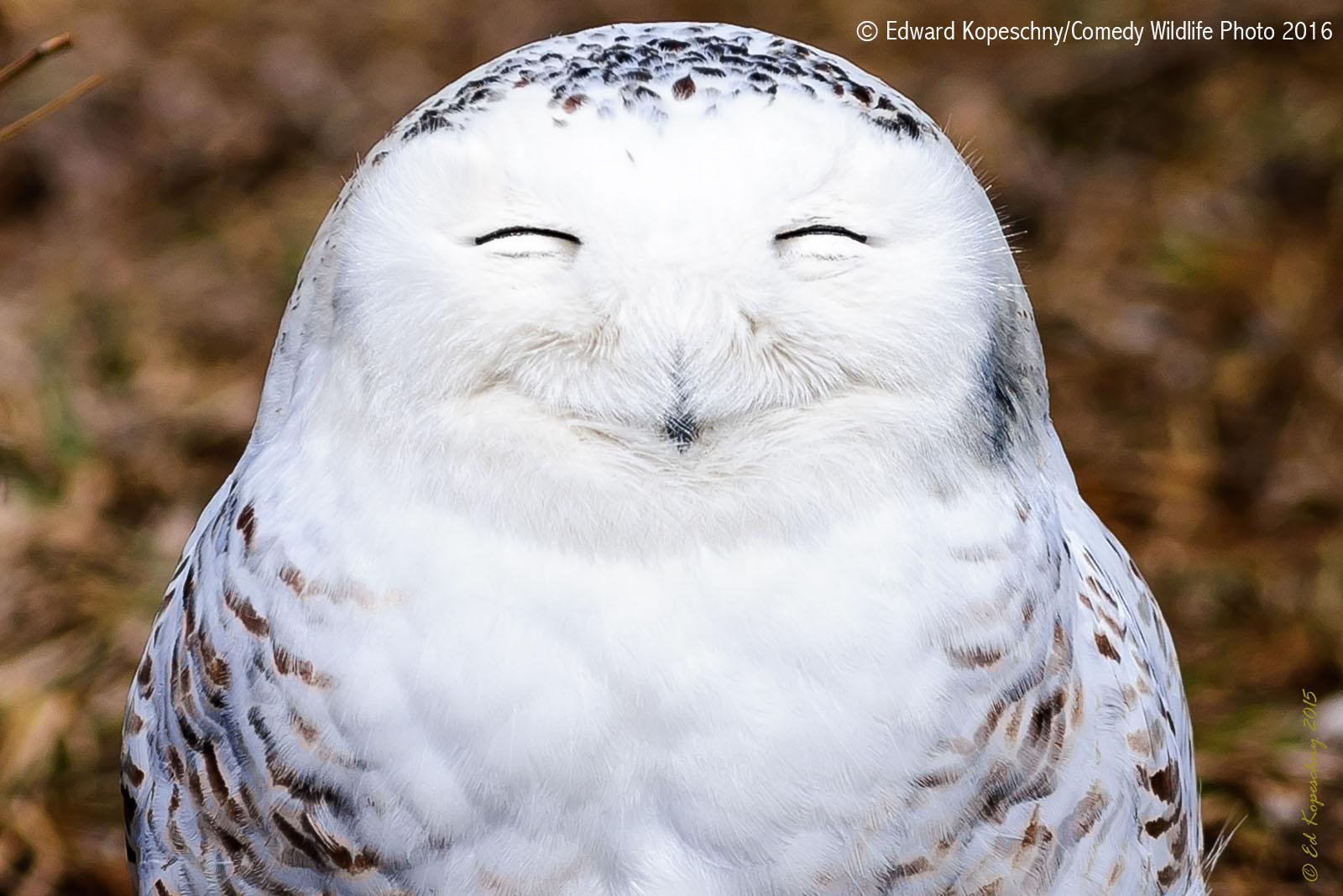 Výsledek obrázku pro happy owl