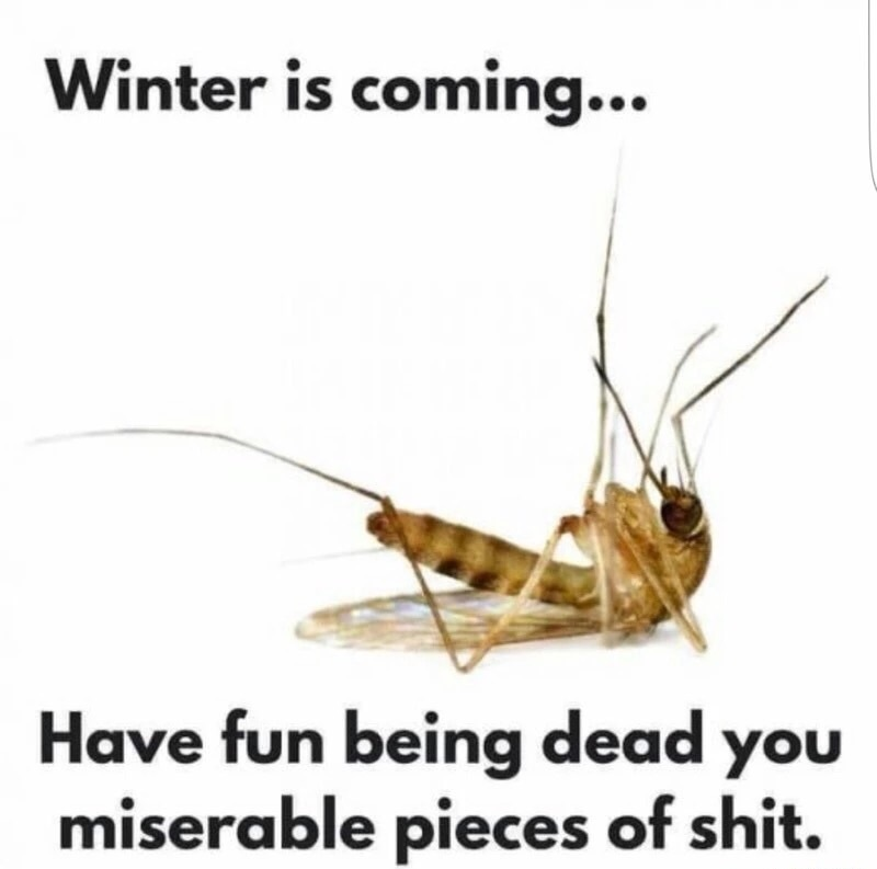 It's the best thing about winter.