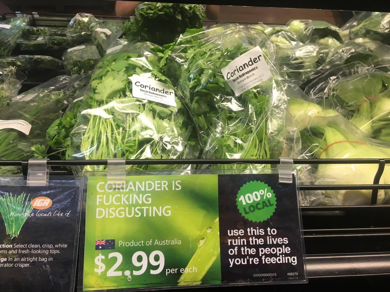 Coriander is what?