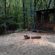 RIP Log Dog