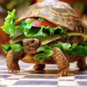 Selfpropelled turtleburger.